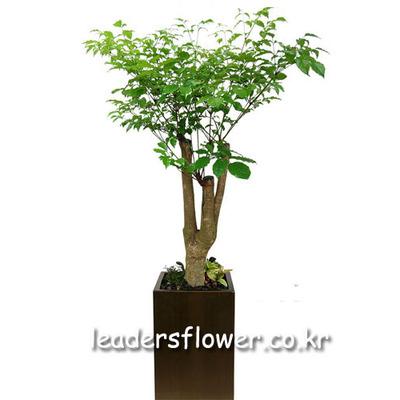 행복나무 4호