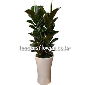 고무나무 4호